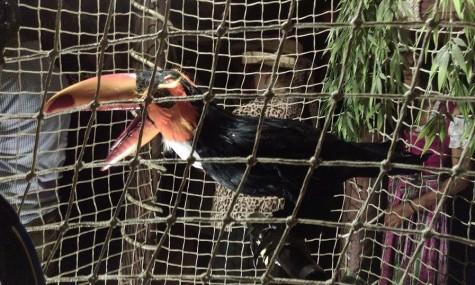Die Tukan-Animatronic warnt vor dem Wasser - Anklicken zum Vergrößern!