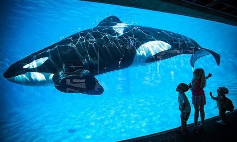 Kinder beobachten einen Orca in Sea World San Diego - Anklicken zum Vergrößern!