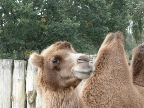 Angehängte Bilder: Tierpark Gettorf 2014 015.JPG