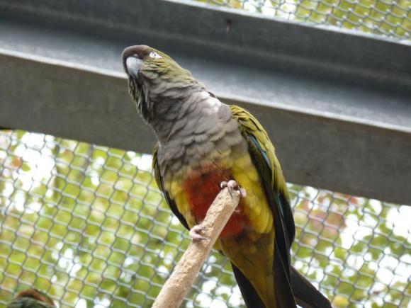 Angehängte Bilder: Tierpark Gettorf 2014 012.JPG