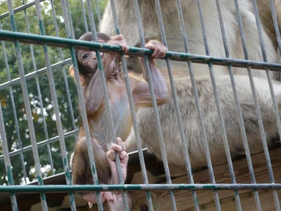 Angehängte Bilder: Tierpark Gettorf 2014 049.JPG
