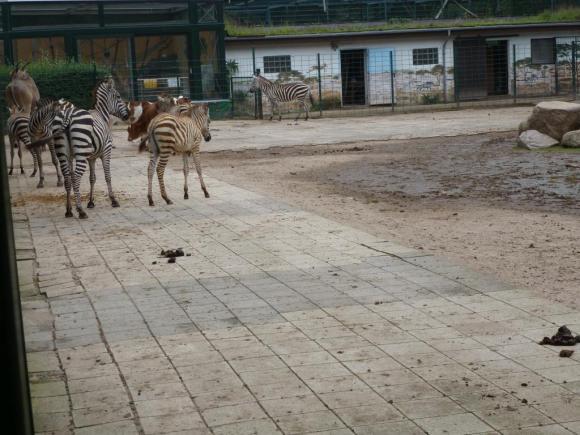 Angehängte Bilder: Tierpark Gettorf 2014 027.JPG