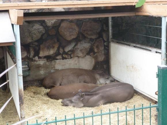 Angehängte Bilder: Tierpark Gettorf 2014 005.JPG