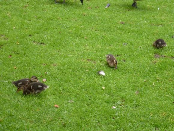 Angehängte Bilder: Tierpark Gettorf 2014 017.JPG