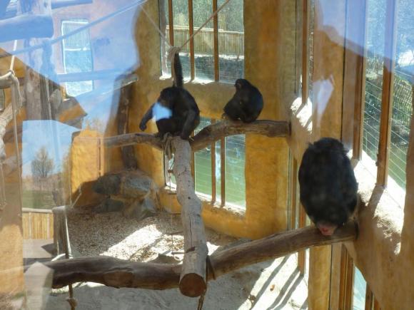 Angehängte Bilder: Grömitz 05.04.2012 012.JPG