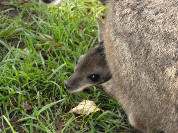 Angehängte Bilder: Tierpark Gettorf 2014 039.JPG