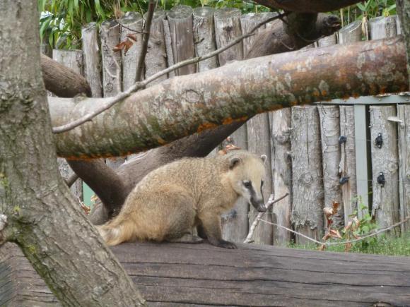 Angehängte Bilder: Tierpark Gettorf 2014 002.JPG