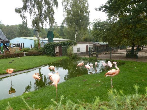 Angehängte Bilder: Tierpark Gettorf 2014 004.JPG