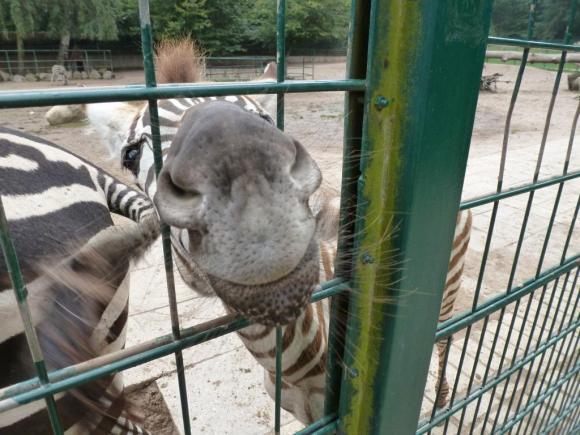 Angehängte Bilder: Tierpark Gettorf 2014 030.JPG