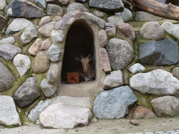 Angehängte Bilder: Tierpark Gettorf 2014 047.JPG