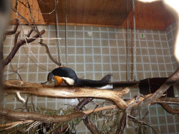 Angehängte Bilder: Tierpark Gettorf 2014 036.JPG