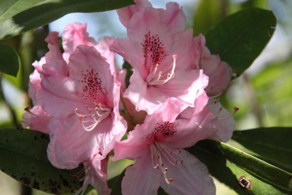Angehängte Bilder: 21. Blume.JPG